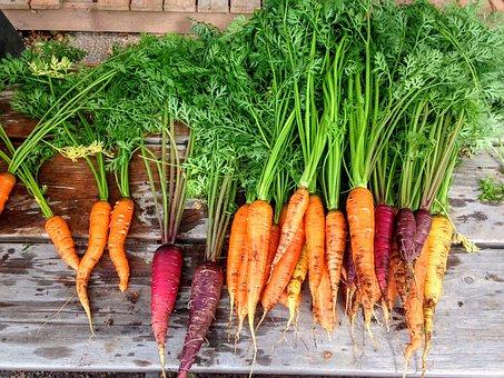 carrot-2743498__340